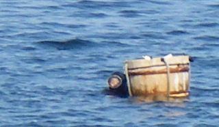 素潜りでウニをとる漁師