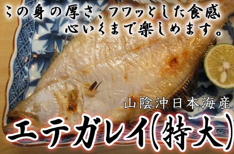 この道35年の名人が作る絶妙の塩加減山陰沖日本海産エテガレイ特大