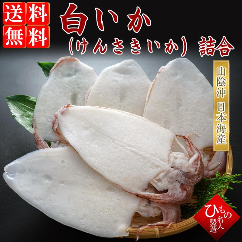 山陰沖日本海産、白いか(ケンサキイカ)詰め合わせ-5枚