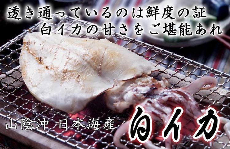 白いか(ケンサキイカ)詰め合わせ-5枚 焼き