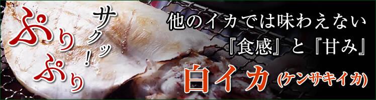 白イカ(ケンサキイカ)