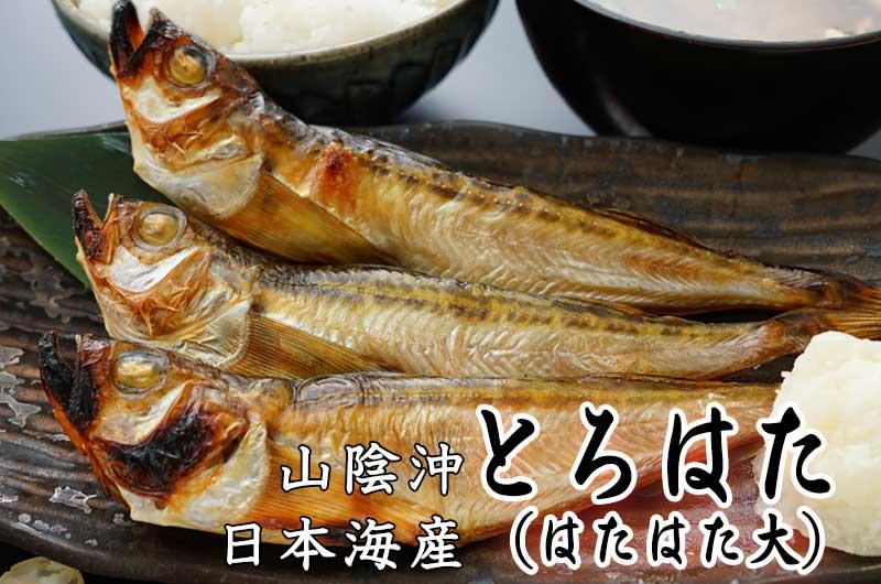 口に広がるうま味。そして、ぷりぷりの食感。山陰沖日本海産 トロハタ(ハタハタ・大)