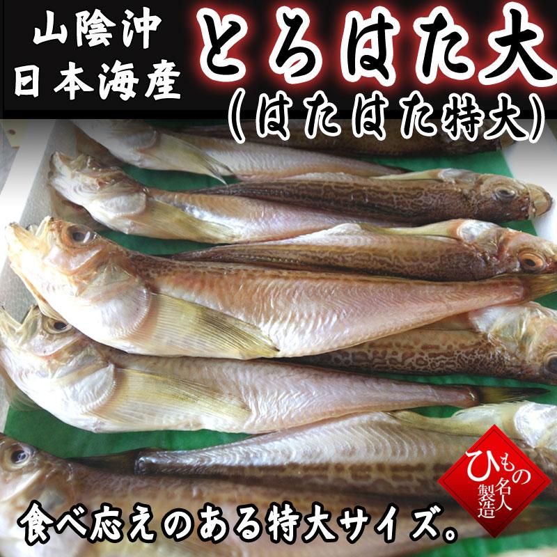 口に広がるうま味。そして、ぷりぷりの食感。山陰沖日本海産 トロハタ(ハタハタ・特大)