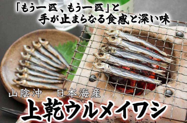 もう一匹、もう一匹」と手が止まらなくなる食感と深い味わい。山陰沖日本海産 上乾ウルメイシ
