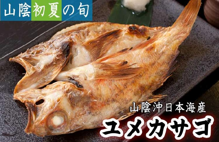 脂ののったフワっとした身質。山陰沖日本海産 ユメカサゴ