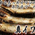 日本最安の出世魚